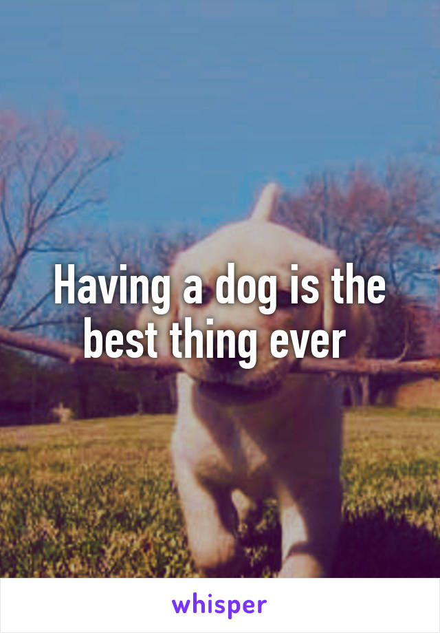Having a dog is the best thing ever