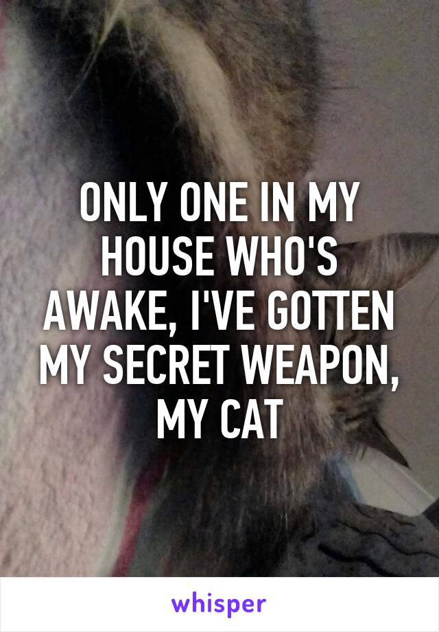 ONLY ONE IN MY HOUSE WHO'S AWAKE, I'VE GOTTEN MY SECRET WEAPON, MY CAT