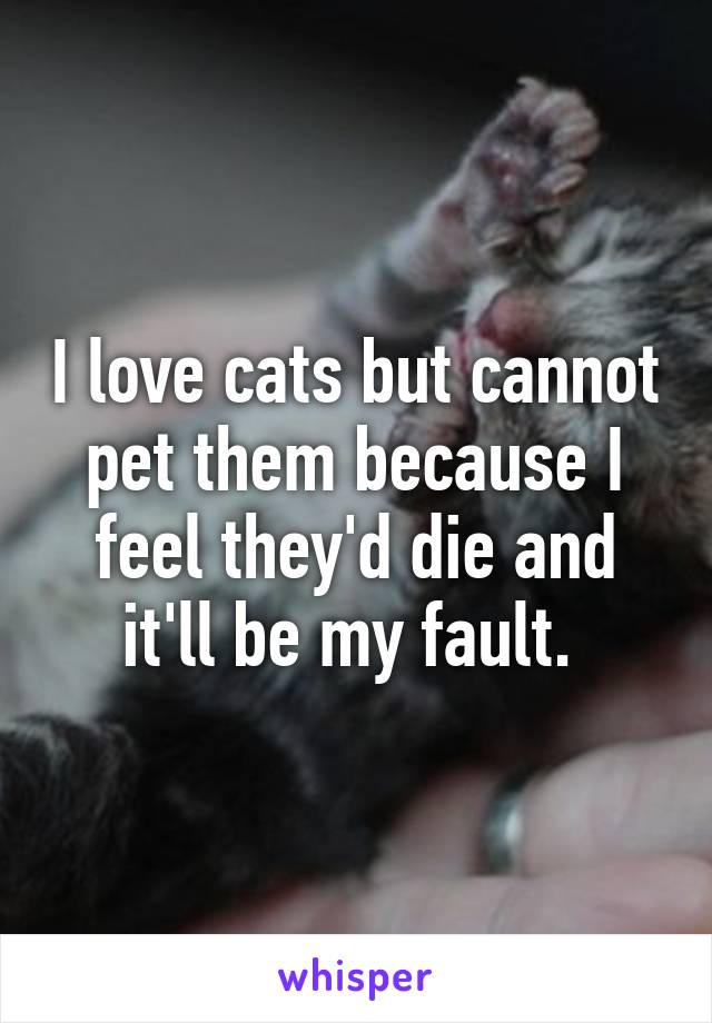 I love cats but cannot pet them because I feel they'd die and it'll be my fault.