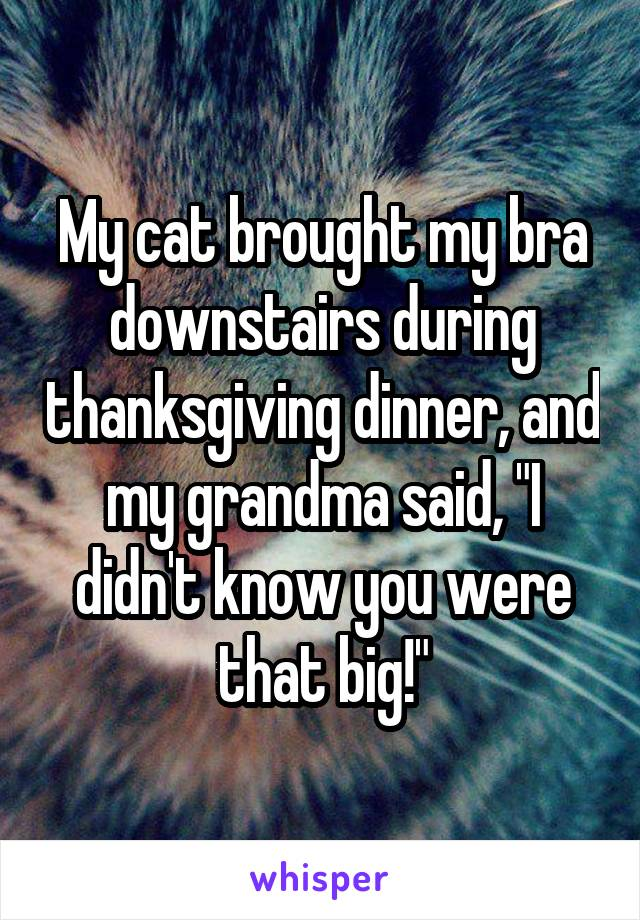 "My cat brought my bra downstairs during thanksgiving dinner, and my grandma said, ""I didn't know you were that big!"""