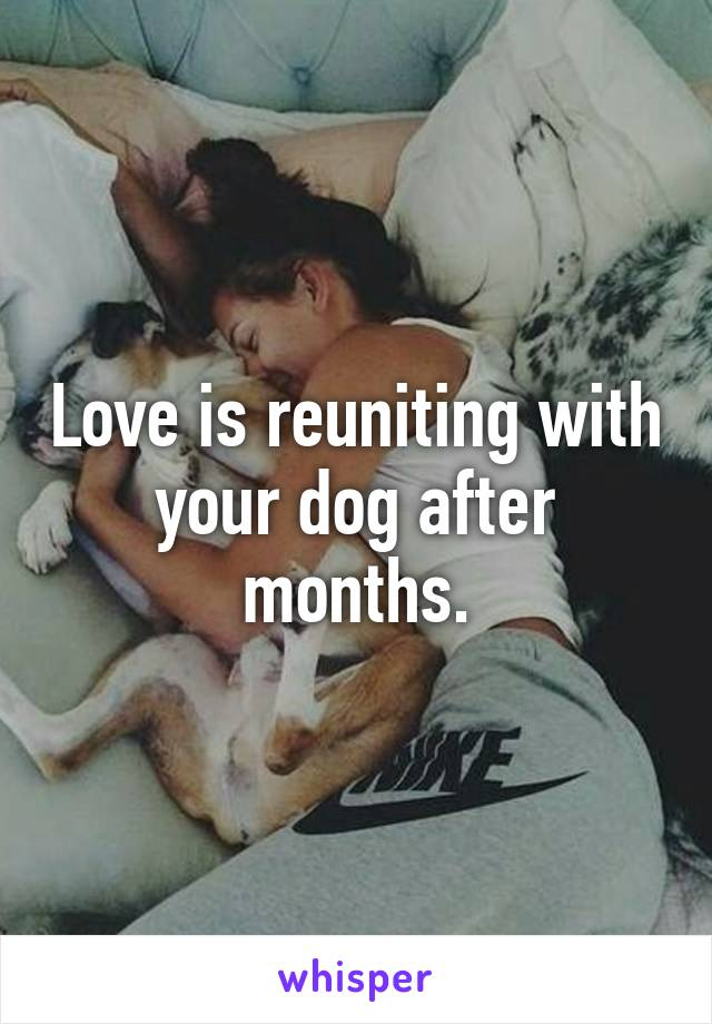 Love is reuniting with your dog after months.