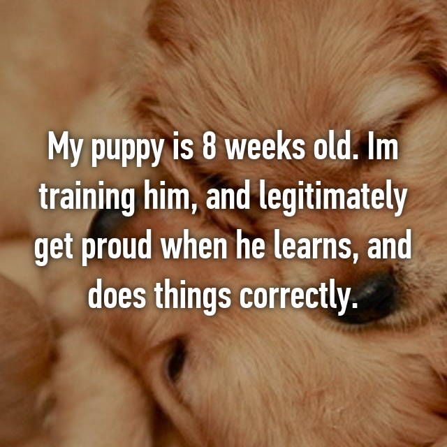 My puppy is 8 weeks old. Im training him, and legitimately get proud when he learns, and does things correctly.