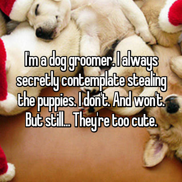 I'm a dog groomer. I always secretly contemplate stealing the puppies. I don't. And won't. But still... They're too cute.