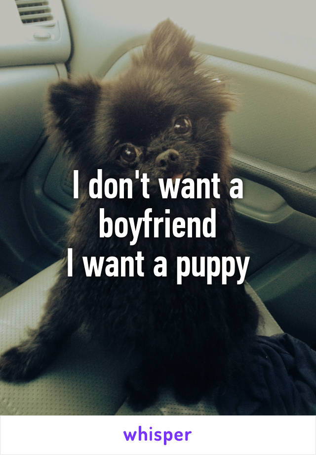 I don't want a boyfriend I want a puppy