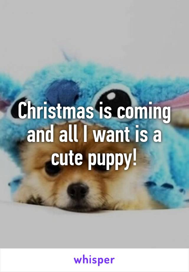 Christmas is coming and all I want is a cute puppy!