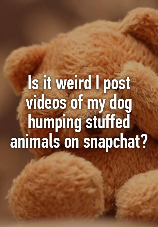 Is It Weird I Post Videos Of My Dog Humping Stuffed Animals On Snapchat