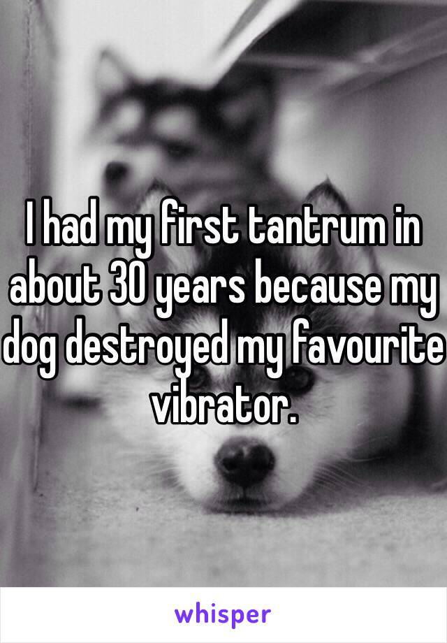 I had my first tantrum in about 30 years because my dog destroyed my favourite vibrator.