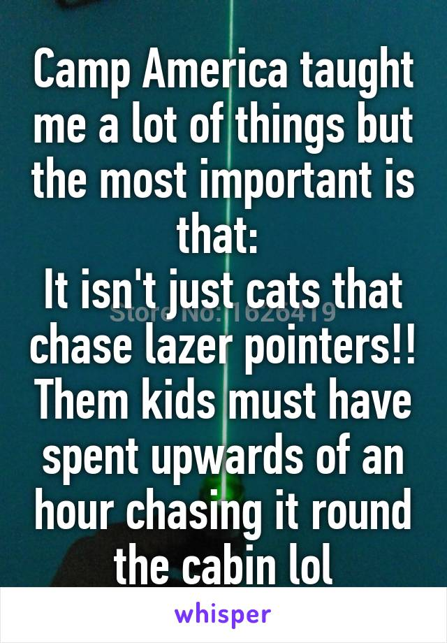 Camp America taught me a lot of things but the most important is that:  It isn't just cats that chase lazer pointers!! Them kids must have spent upwards of an hour chasing it round the cabin lol