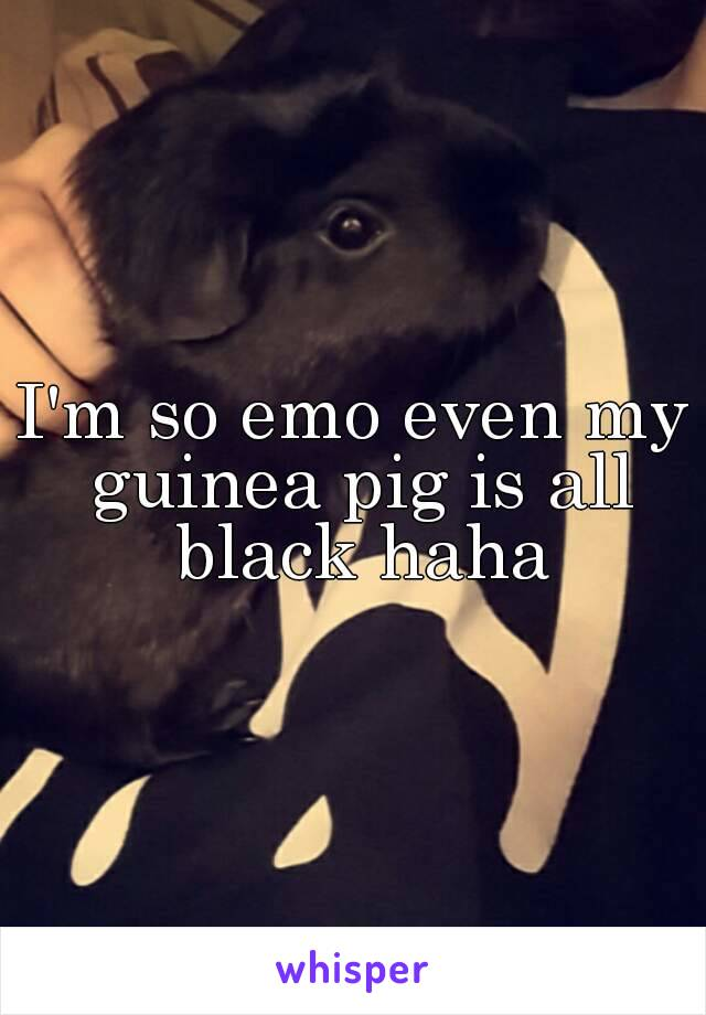 I'm so emo even my guinea pig is all black haha