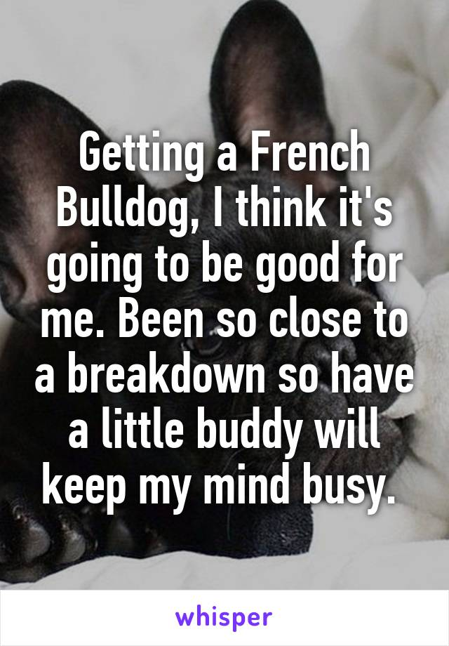 Getting a French Bulldog, I think it's going to be good for me. Been so close to a breakdown so have a little buddy will keep my mind busy.