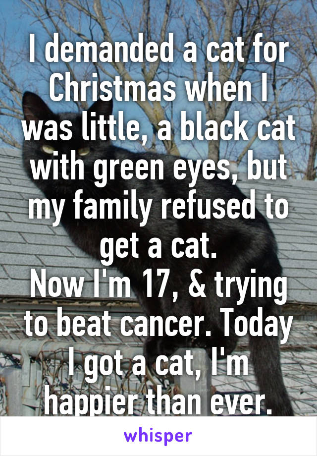 I demanded a cat for Christmas when I was little, a black cat with green eyes, but my family refused to get a cat. Now I'm 17, & trying to beat cancer. Today I got a cat, I'm happier than ever.