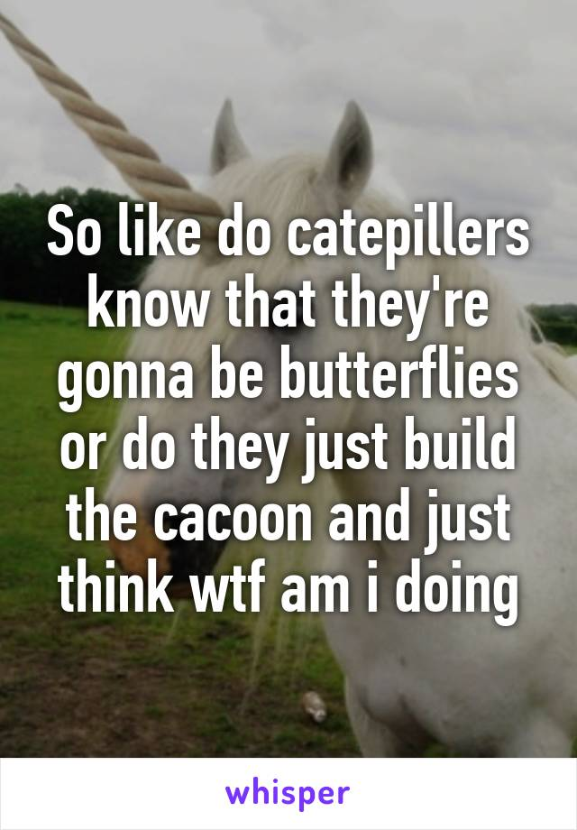 So like do catepillers know that they're gonna be butterflies or do they just build the cacoon and just think wtf am i doing