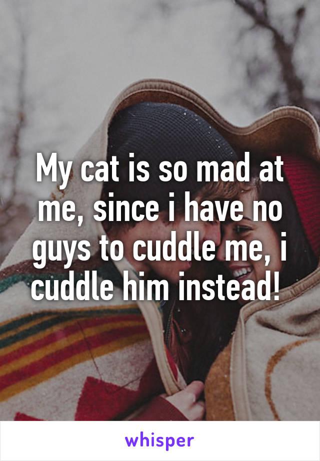 My cat is so mad at me, since i have no guys to cuddle me, i cuddle him instead!