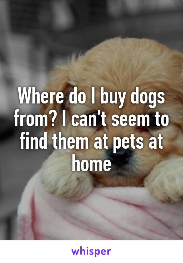 Where do I buy dogs from? I can't seem to find them at pets at home