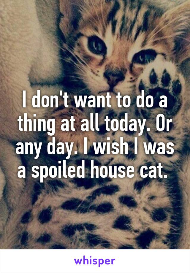 I don't want to do a thing at all today. Or any day. I wish I was a spoiled house cat.