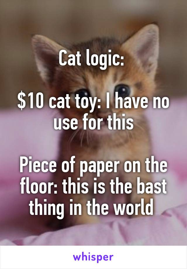 Cat logic:   $10 cat toy: I have no use for this  Piece of paper on the floor: this is the bast thing in the world
