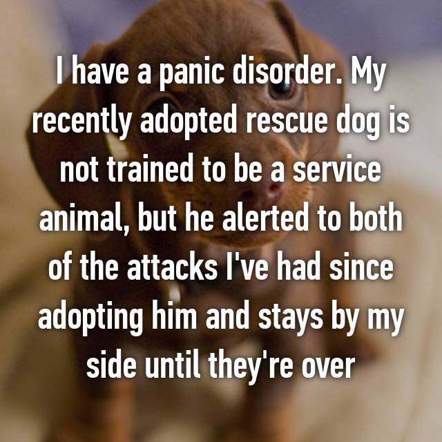I have a panic disorder. My recently adopted rescue dog is not trained to be a service animal, but he alerted to both of the attacks I've had since adopting him and stays by my side until they're over