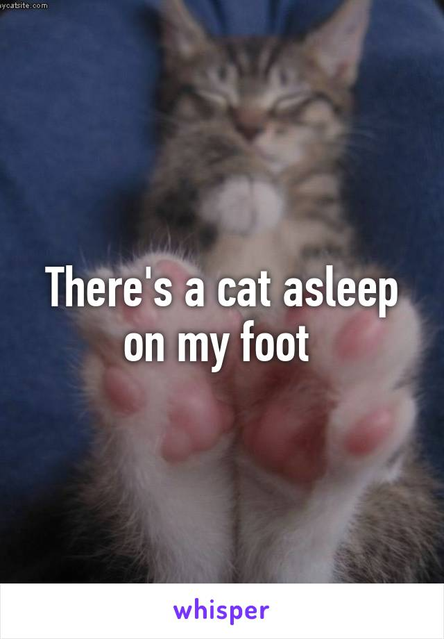 There's a cat asleep on my foot