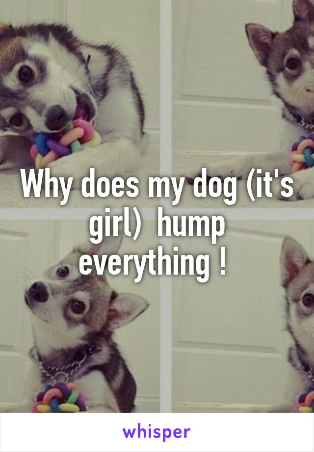Why does my dog (it's girl)  hump everything !