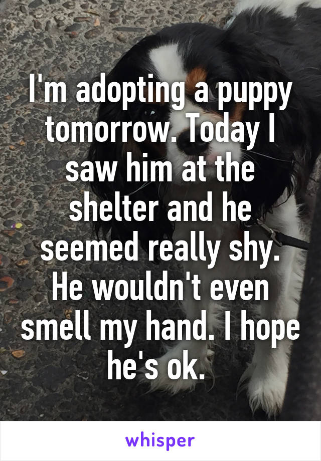 I'm adopting a puppy tomorrow. Today I saw him at the shelter and he seemed really shy. He wouldn't even smell my hand. I hope he's ok.