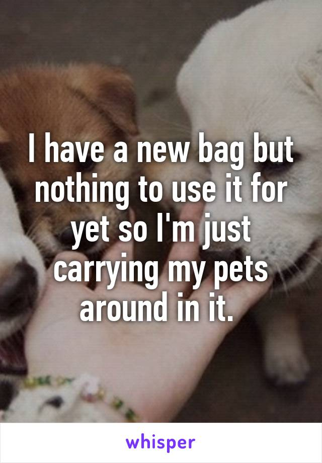 I have a new bag but nothing to use it for yet so I'm just carrying my pets around in it.