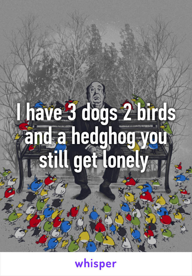 I have 3 dogs 2 birds and a hedghog you still get lonely