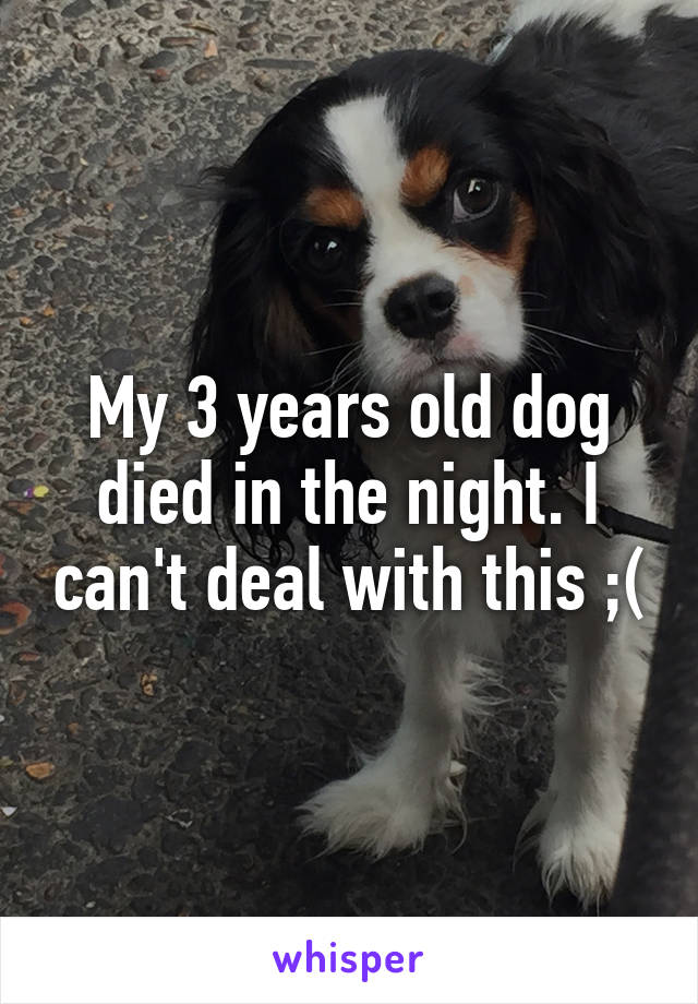 My 3 years old dog died in the night. I can't deal with this ;(