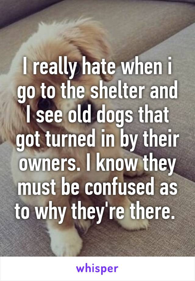 I really hate when i go to the shelter and I see old dogs that got turned in by their owners. I know they must be confused as to why they're there.