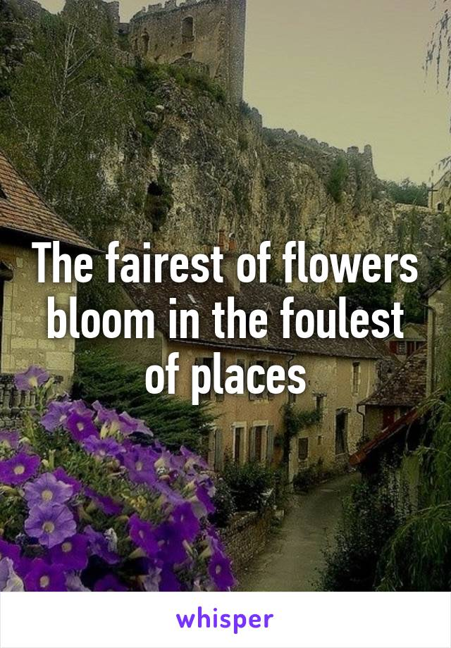 The fairest of flowers bloom in the foulest of places