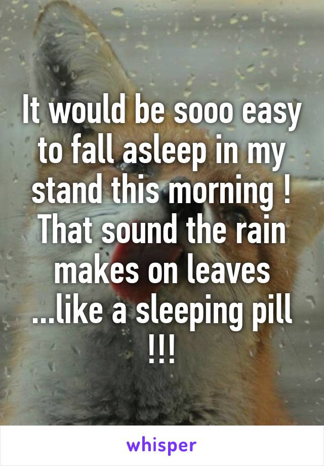 It would be sooo easy to fall asleep in my stand this morning ! That sound the rain makes on leaves ...like a sleeping pill !!!