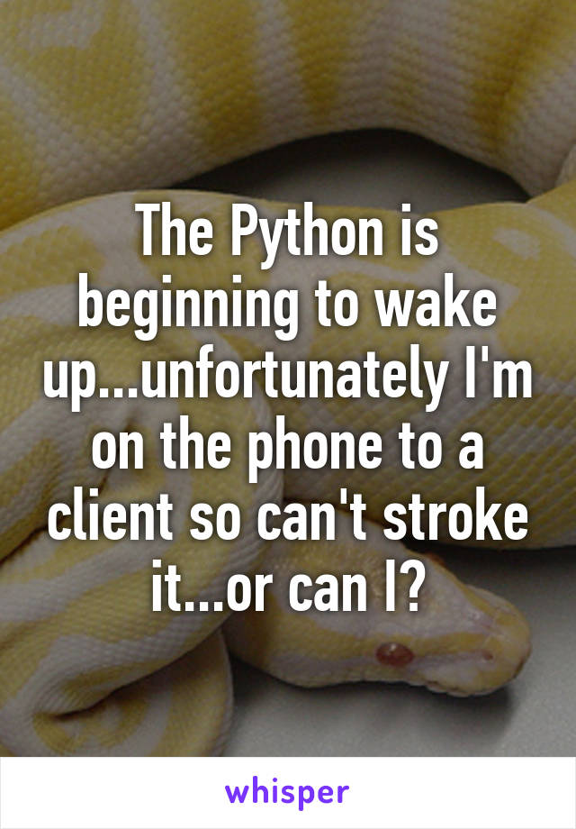 The Python is beginning to wake up...unfortunately I'm on the phone to a client so can't stroke it...or can I?