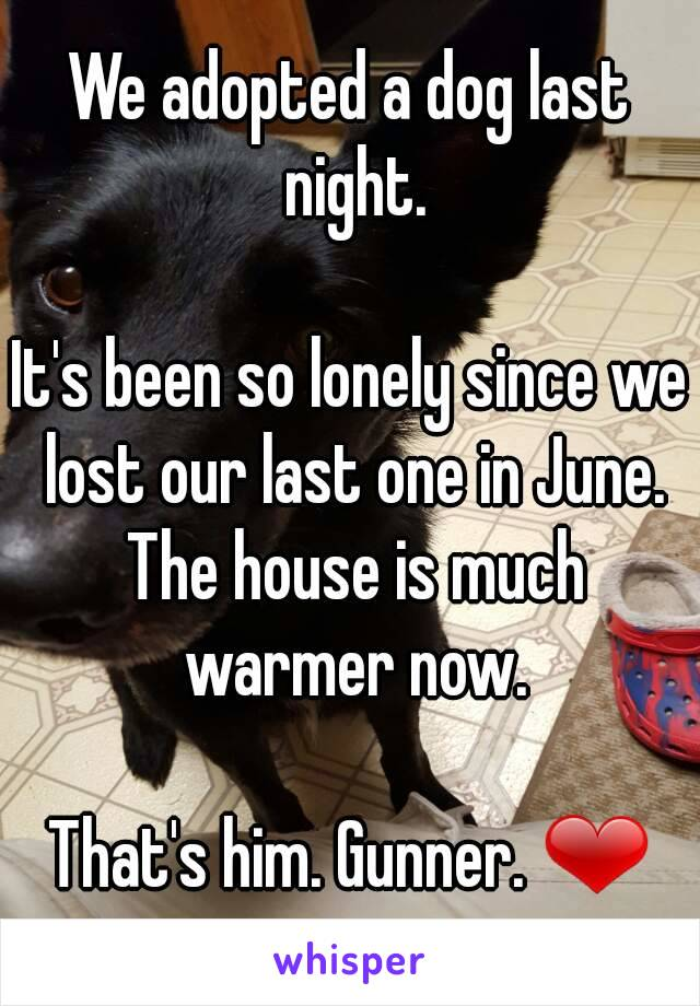 We adopted a dog last night.  It's been so lonely since we lost our last one in June. The house is much warmer now.  That's him. Gunner. ❤