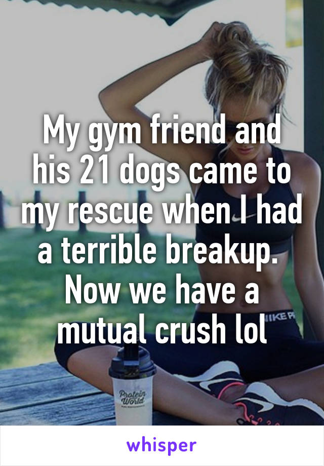 My gym friend and his 21 dogs came to my rescue when I had a terrible breakup.  Now we have a mutual crush lol
