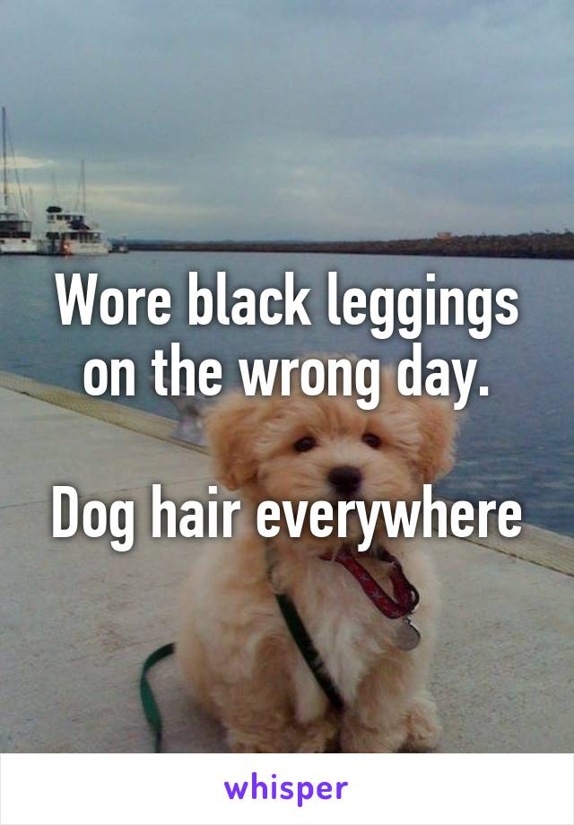 Wore black leggings on the wrong day.  Dog hair everywhere