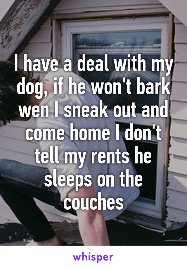 I have a deal with my dog, if he won't bark wen I sneak out and come home I don't tell my rents he sleeps on the couches