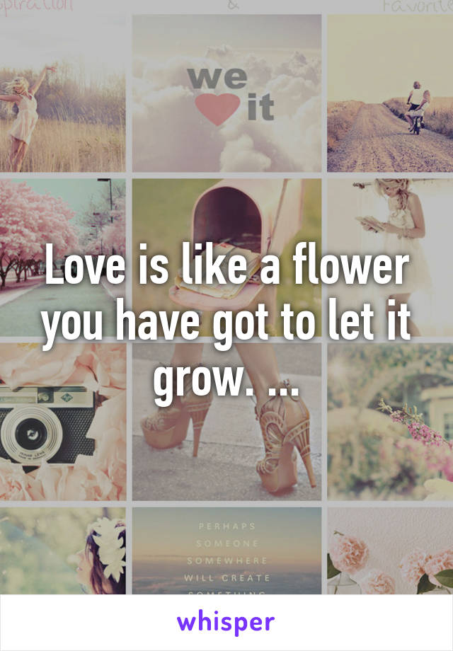 Love is like a flower you have got to let it grow. ...