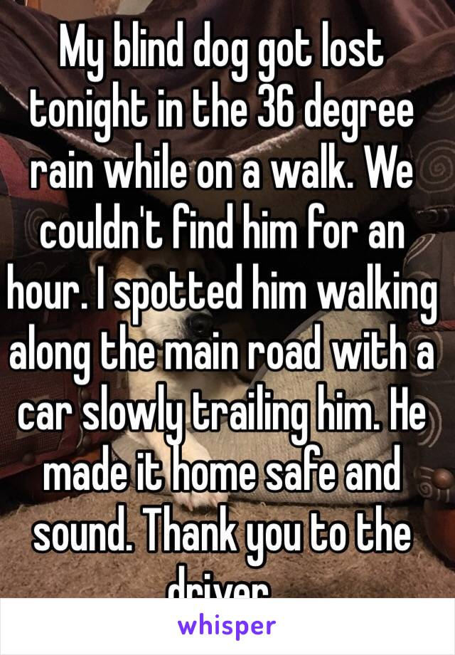 My blind dog got lost tonight in the 36 degree rain while on a walk. We couldn't find him for an hour. I spotted him walking along the main road with a car slowly trailing him. He made it home safe and sound. Thank you to the driver.