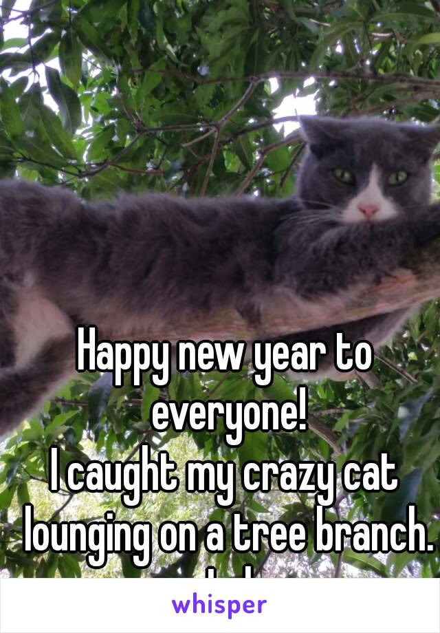 Happy new year to everyone! I caught my crazy cat lounging on a tree branch. Lol