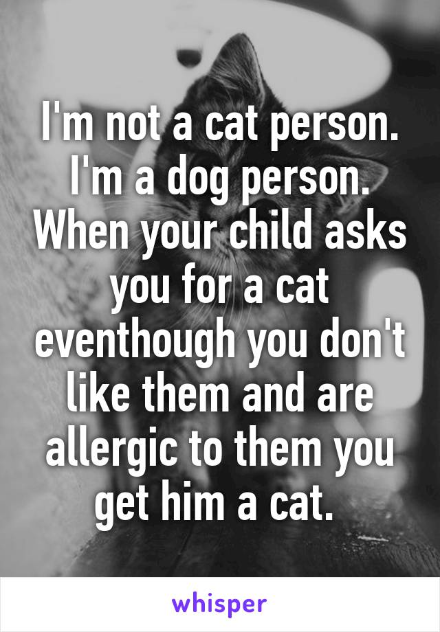 I'm not a cat person. I'm a dog person. When your child asks you for a cat eventhough you don't like them and are allergic to them you get him a cat.