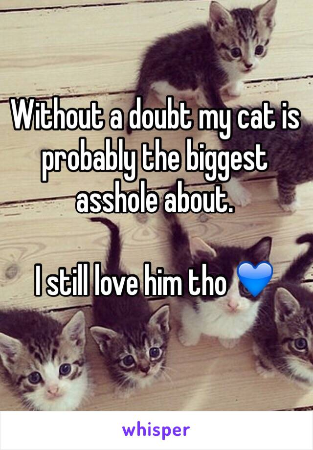 Without a doubt my cat is probably the biggest asshole about.   I still love him tho 💙