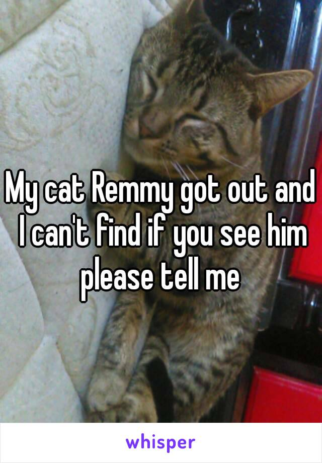 My cat Remmy got out and I can't find if you see him please tell me