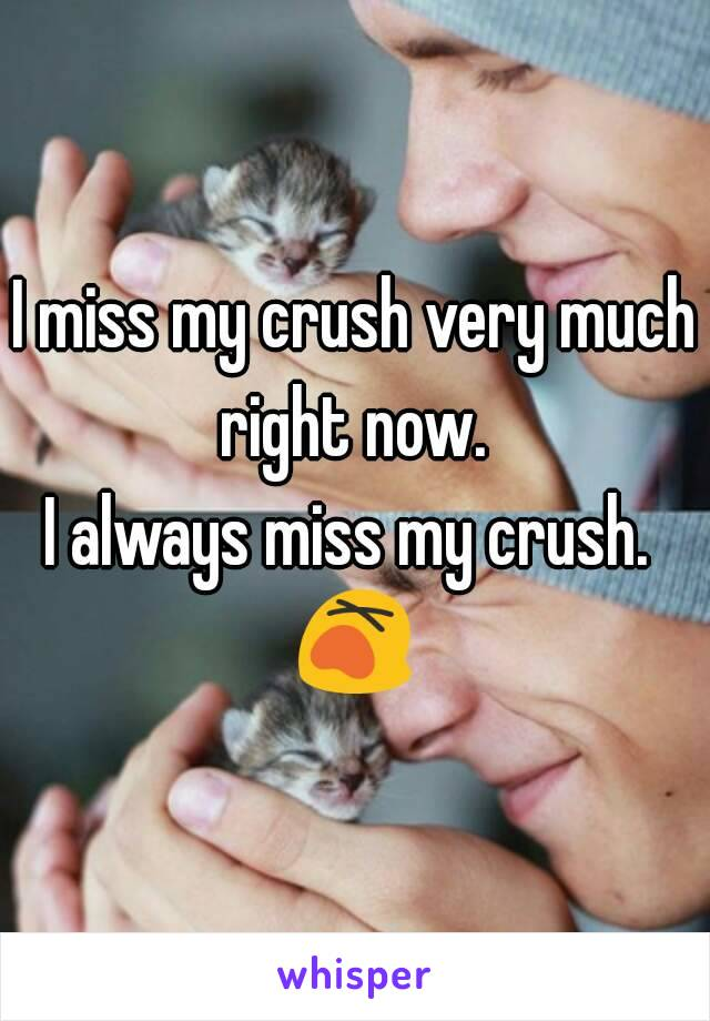I miss my crush very much right now.  I always miss my crush.  😵