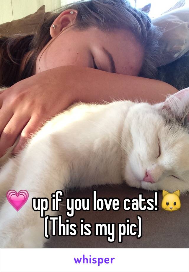💗 up if you love cats!🐱 (This is my pic)