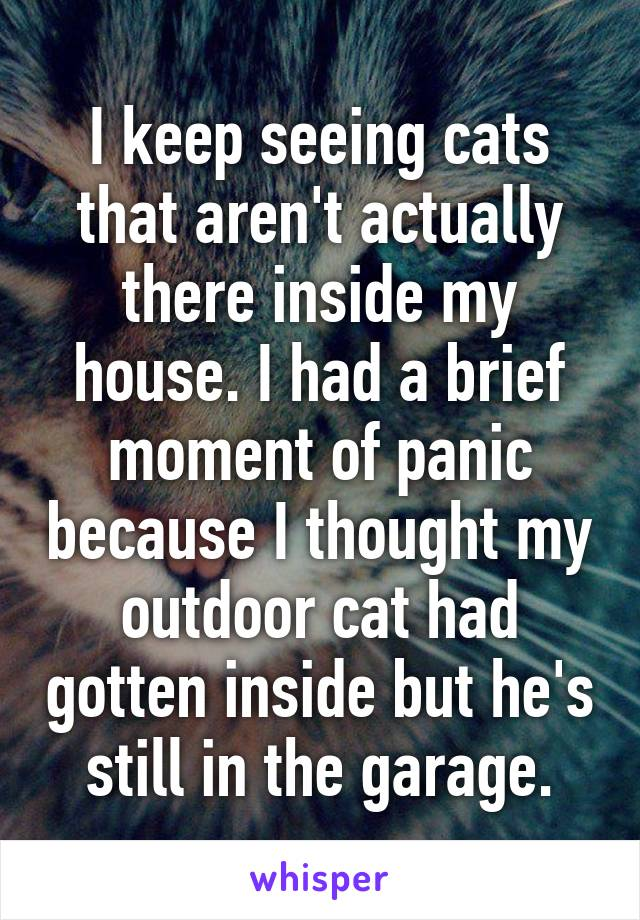 I keep seeing cats that aren't actually there inside my house. I had a brief moment of panic because I thought my outdoor cat had gotten inside but he's still in the garage.