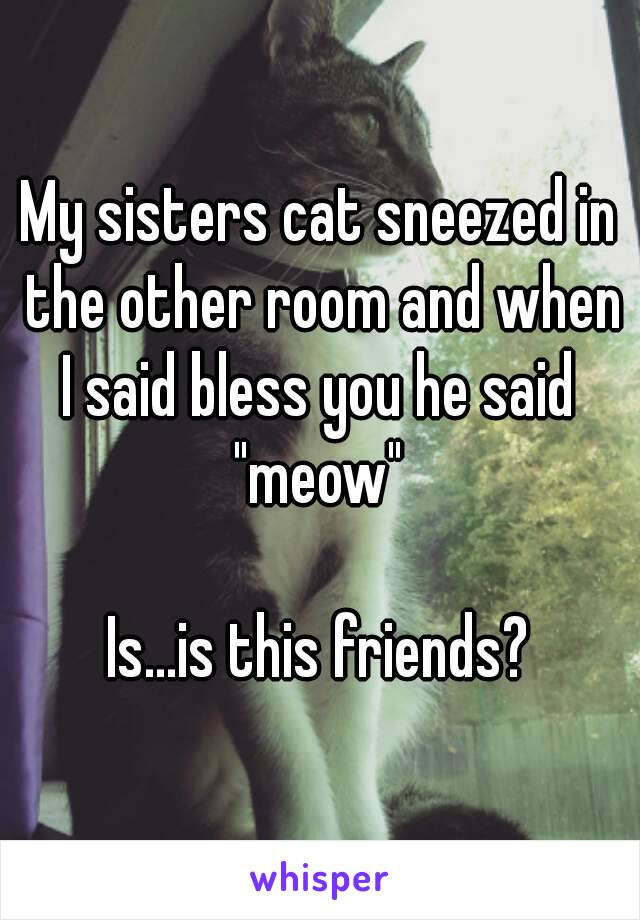 """My sisters cat sneezed in the other room and when I said bless you he said  """"meow""""  Is...is this friends?"""