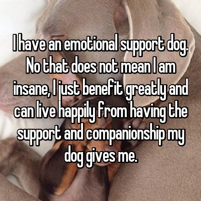I have an emotional support dog. No that does not mean I am insane, I just benefit greatly and can live happily from having the support and companionship my dog gives me.