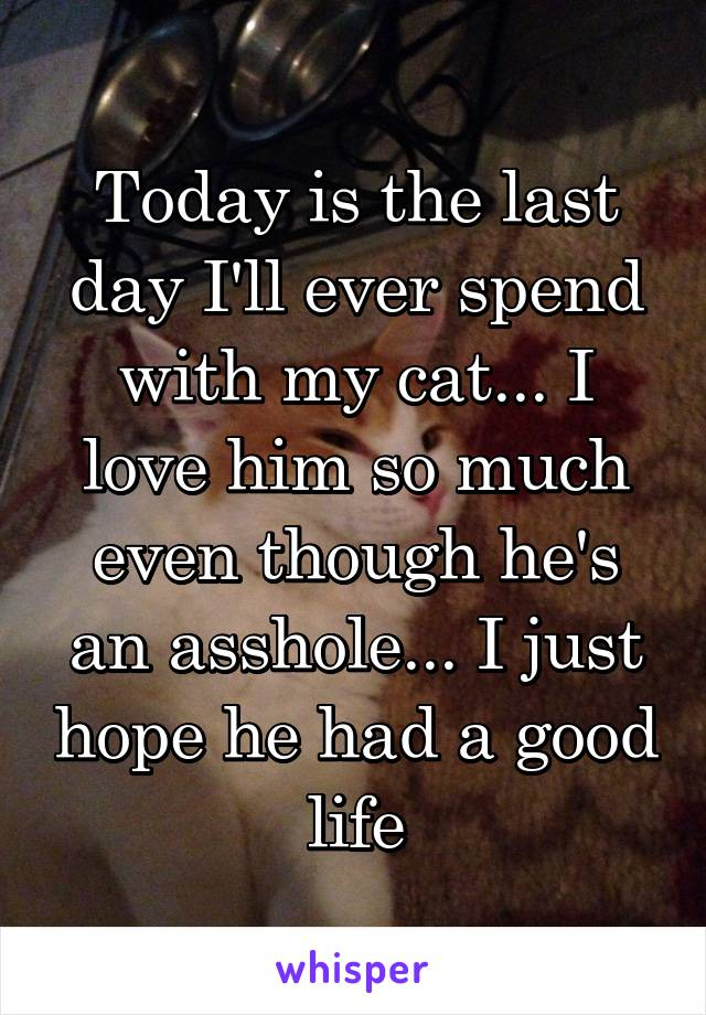 Today is the last day I'll ever spend with my cat... I love him so much even though he's an asshole... I just hope he had a good life