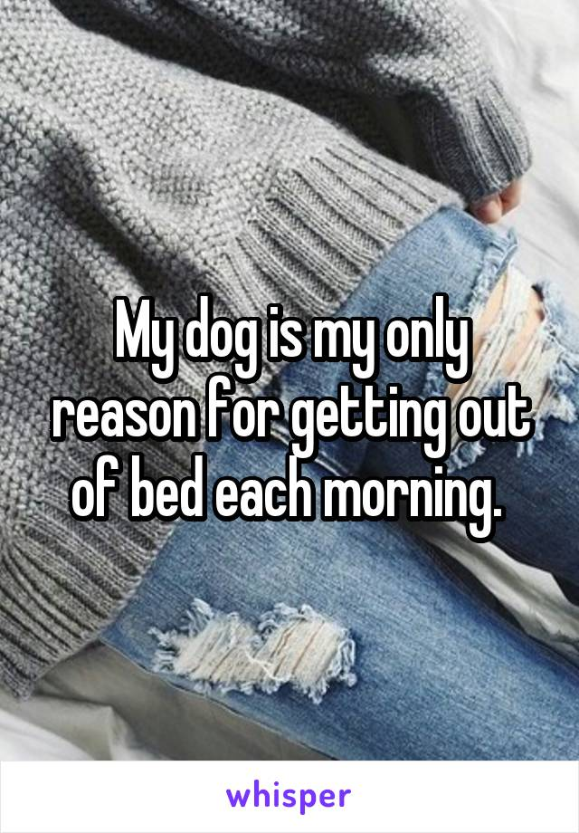 My dog is my only reason for getting out of bed each morning.