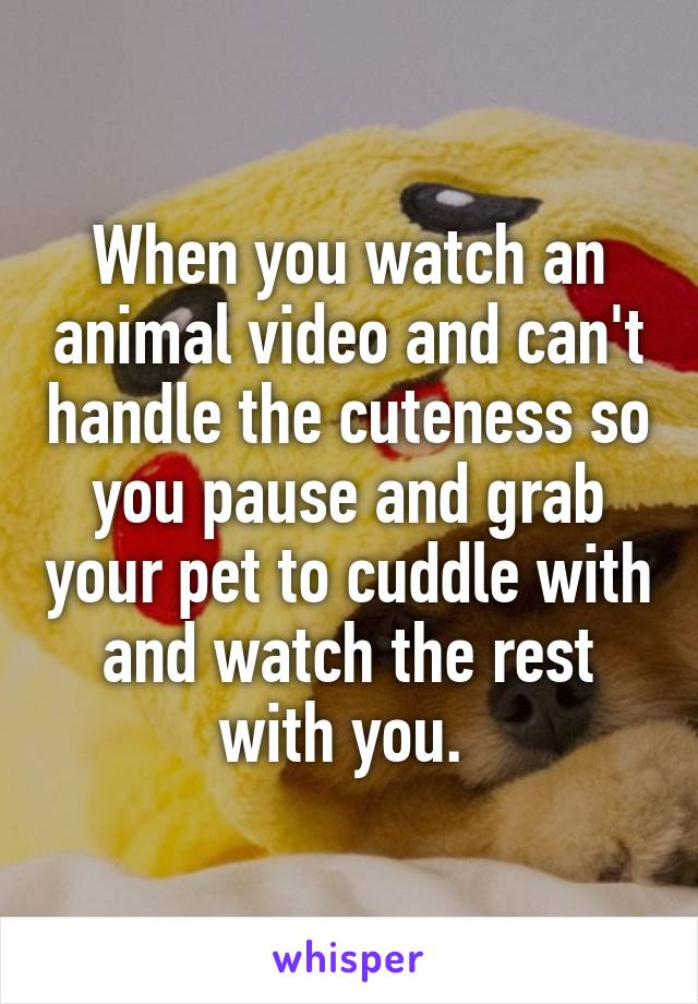 When you watch an animal video and can't handle the cuteness so you pause and grab your pet to cuddle with and watch the rest with you.