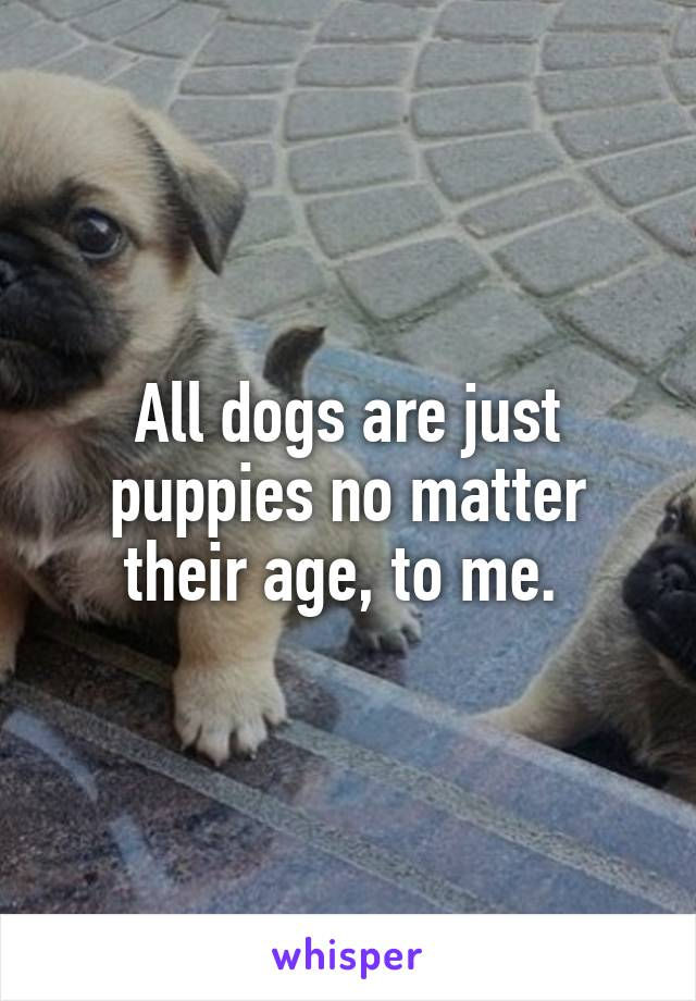All dogs are just puppies no matter their age, to me.
